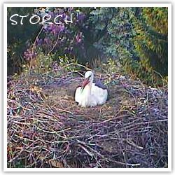 Webcam Storch